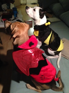 Snoopy and Belle look content in their costumes for our Costume Photo Contest. Photo: Fan Chen